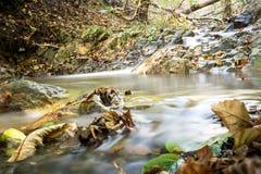 Forest Stream i höst Arkivbilder