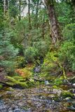 Forest stream. With icy snowmelt water Stock Photo