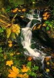 Forest stream im autumn. Illustrations,autumn landscape royalty free stock photography