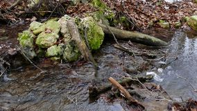 Forest Stream im Winter stock footage
