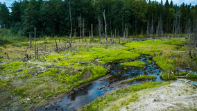 Forest. And stream in the Karelia Royalty Free Stock Image
