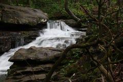 Forest Stream kaskad Royaltyfri Foto