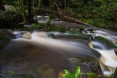 Forest stream Kradueng national park Stock Photography