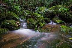 Forest stream Kradueng national park Stock Photo