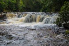 Forest stream Kradueng national park Stock Photos