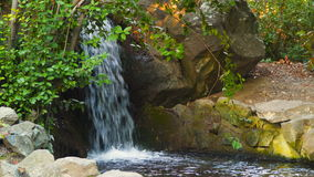 A forest stream laid out with stones stock footage
