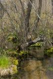 Forest Stream Landscape Imagen de archivo