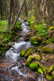 Forest Stream Royalty Free Stock Photos