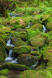 Forest stream Stock Image