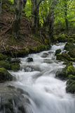 Forest Stream in Montenegro Royalty-vrije Stock Foto