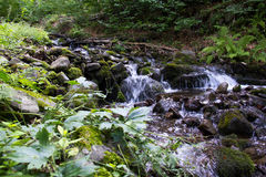 Forest stream. Royalty Free Stock Photo