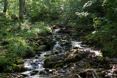 Forest stream. Royalty Free Stock Images