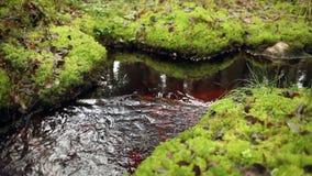 Forest stream murmur stock video footage