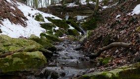 Forest Stream nell'inverno archivi video