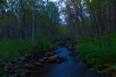 Forest stream at night Royalty Free Stock Photo