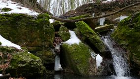 Forest Stream no inverno video estoque