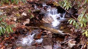 A forest stream in North Carolina. Watch as a small stream cascades through the forest in North Carolina stock video footage