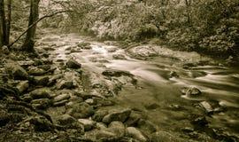 Forest Stream pacifico fotografia stock libera da diritti