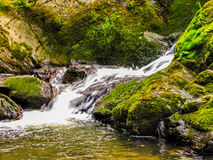 A forest stream. The photo was taken in the Altai mountains Royalty Free Stock Photo