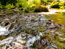 A forest stream. The photo was taken in the Altai mountains Stock Images