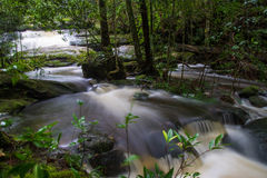 Forest stream. In the Rain Forest at Asia Royalty Free Stock Photos