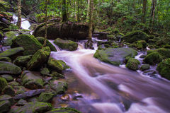 Forest stream. In the Rain Forest at Asia Stock Images