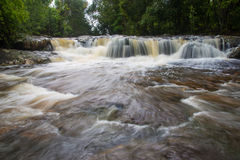 Forest stream. In the Rain Forest at Asia Stock Photography