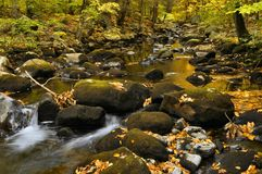 Forest Stream Reflections Royalty Free Stock Image