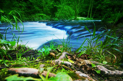 Forest stream running fast royalty free stock photos