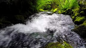 Forest stream running over mossy rocks Stock Images