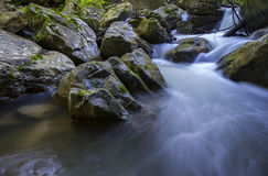 Forest stream Royalty Free Stock Images