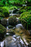 Forest stream running over mossy rocks Stock Photos