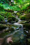 Forest stream running over mossy rocks Royalty Free Stock Photo