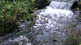 Forest stream running over mossy rocks. Carpats Royalty Free Stock Photography