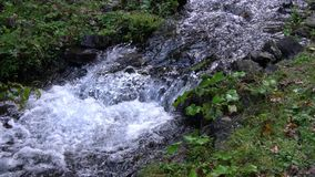 Forest stream running over mossy rocks. Carpats Stock Photography
