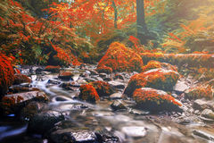 Forest stream running over mossy rocks. Stock Photos