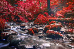 Forest stream running over mossy rocks Royalty Free Stock Images
