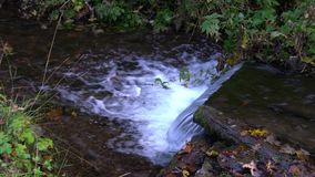 Forest stream running over mossy rocks. Carpats Royalty Free Stock Image