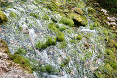 Forest stream running over mossy rocks. The mountain river in Crimea Royalty Free Stock Image