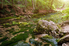 Forest stream running over mossy rocks. The mountain river in Crimea Stock Photography