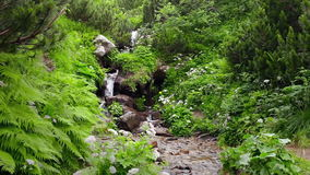 Forest stream running over rocks. In the fairy forest of the Carpathians stock video