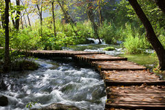 Forest Stream Scenery. Wooden foot bridge across the stream in mountain forest, Croatia Royalty Free Stock Photos
