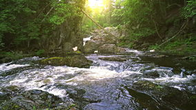 Forest stream. Scenic stream with rapids on Upper Peninsula, Michigan stock video footage