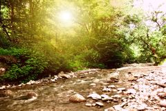 Forest stream, Stock Photography