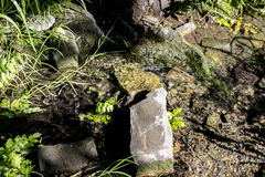 Forest stream. Small forest stream with stones, a moss and a grass Stock Photos