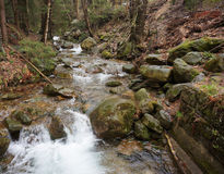 Forest stream Stock Photo