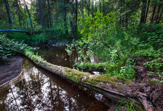 Forest stream and snags Stock Photos