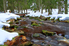 Forest stream with snow. Long time exposure royalty free stock image