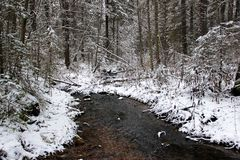 A forest stream among the snows. Fast stream in one of the snow-covered forests of Russia Stock Image