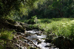 Forest Stream - South Africa Royalty Free Stock Photo